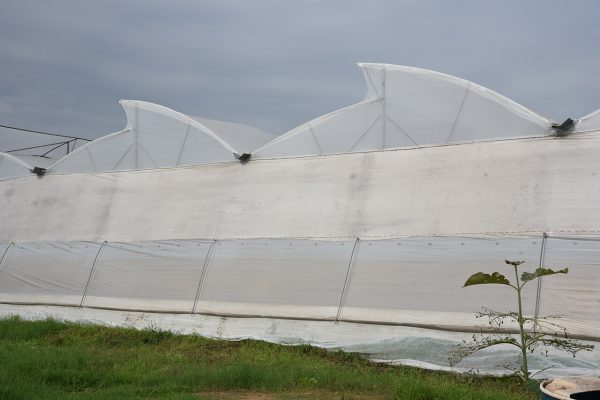Greenhouse Turnkey Project